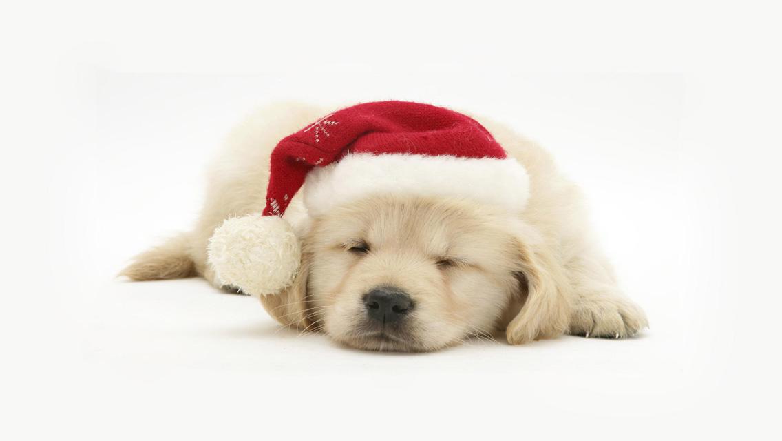 Christmas Puppy - Free Download Christmas Dog HD ...